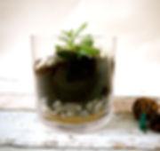 Terrarium avec plante grasse
