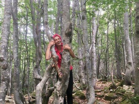 Tra i boschi...