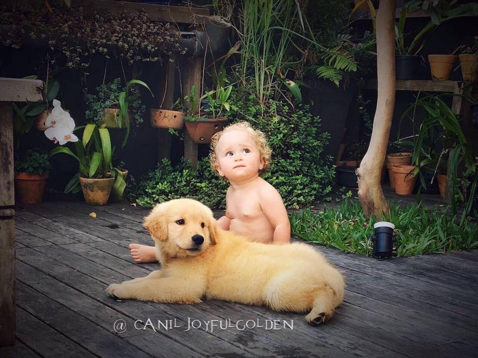 Goldens & Crianças ♥