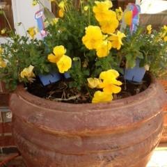 Secret to a Successful Garden