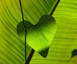 Leadership: An Affair of the Heart and Mind