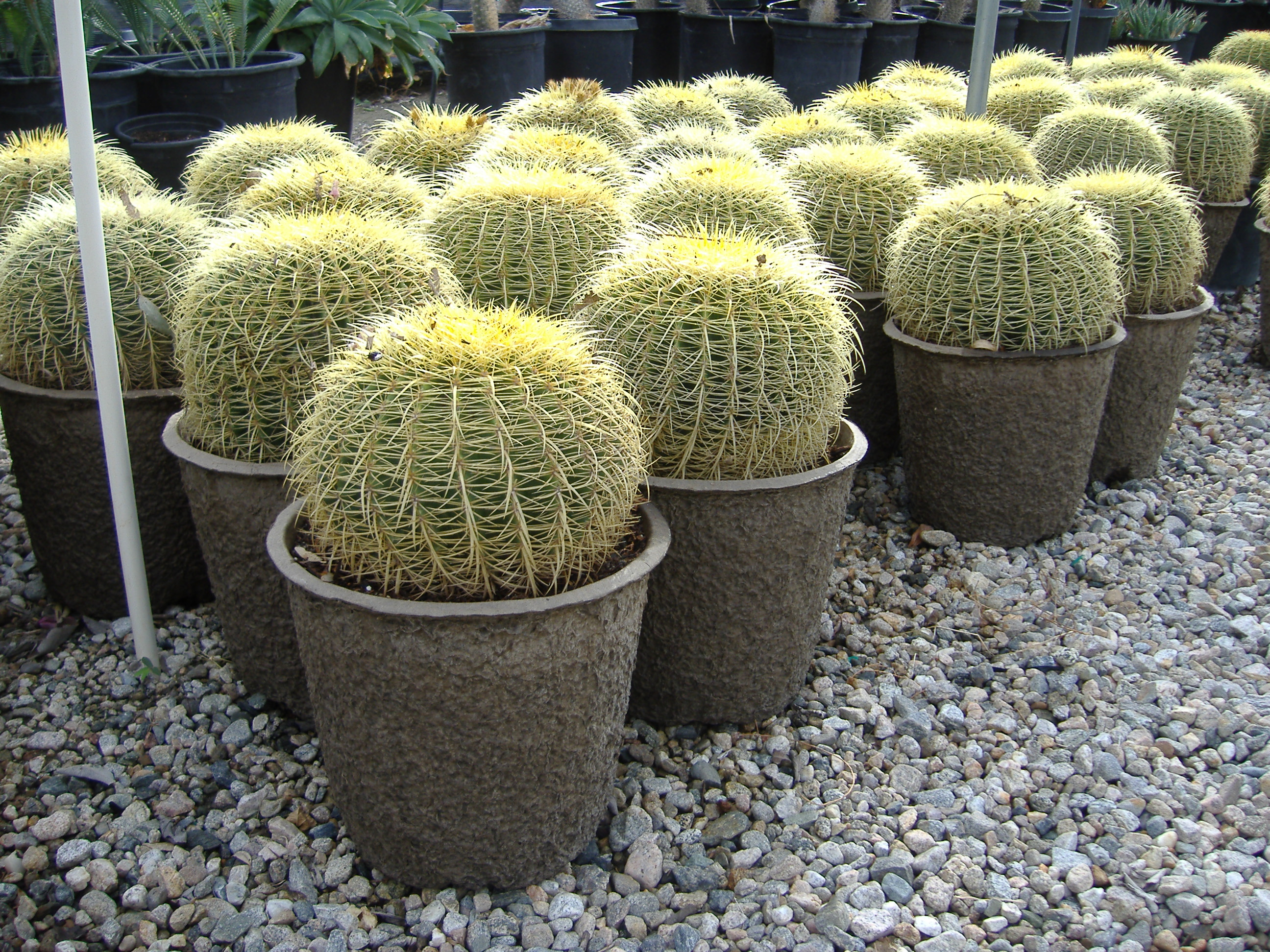Cactus Plant Pot 'n All