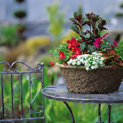 15X6 Flower Basket