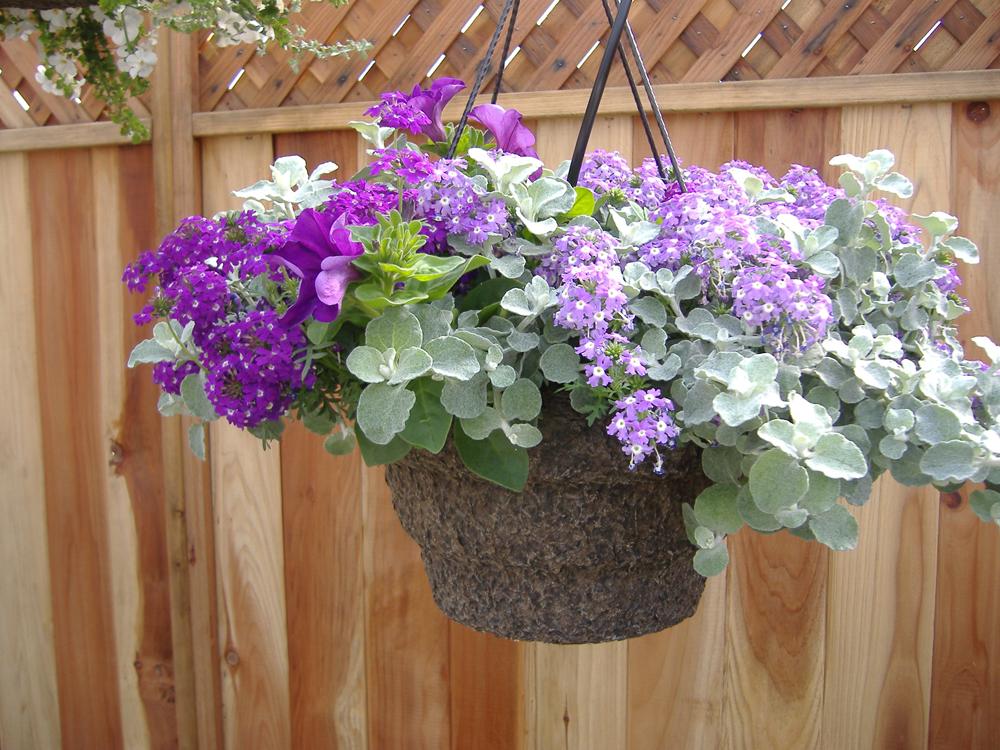Mixed Violet + Gray Foliage