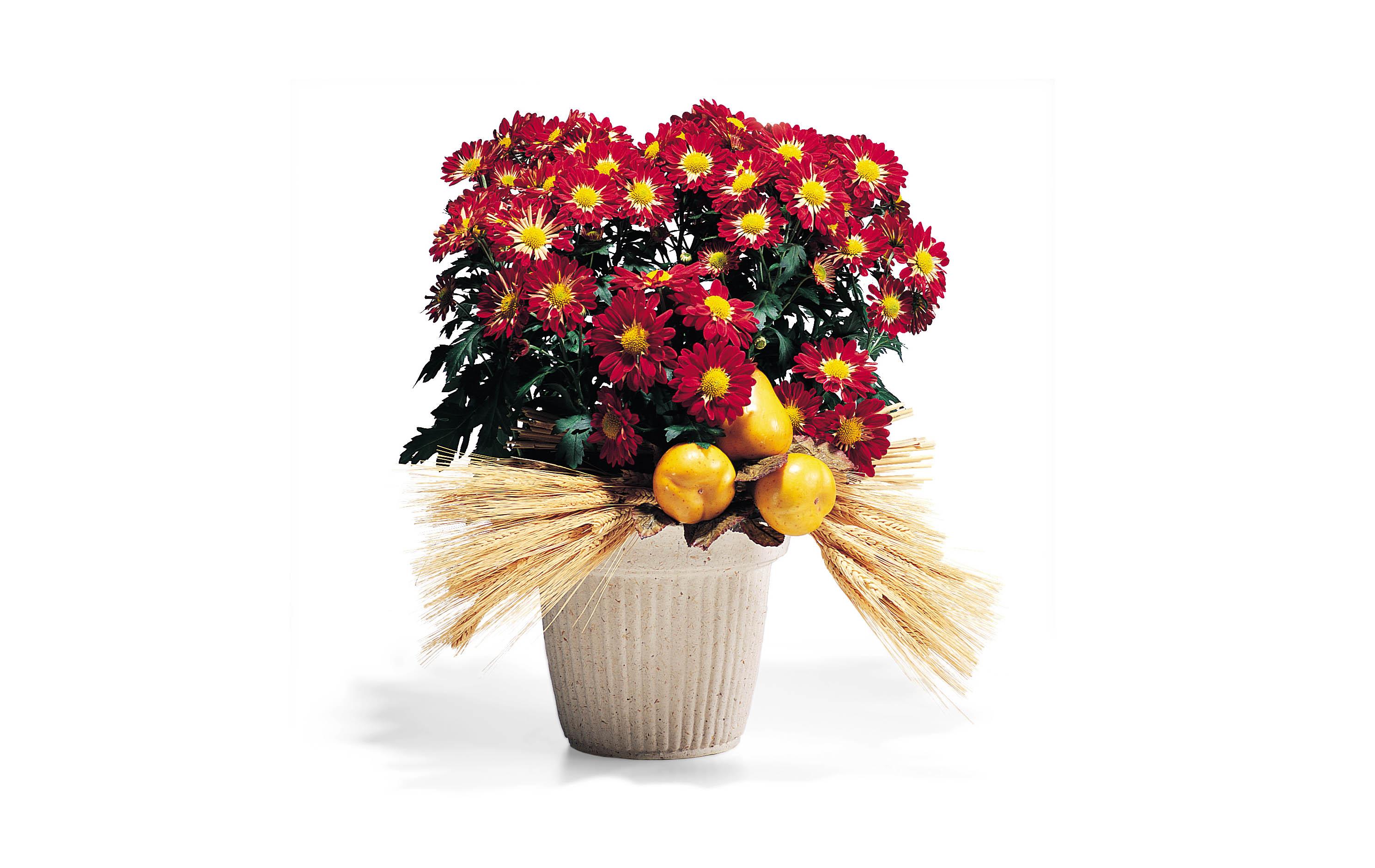 Marigolds in Field Straw