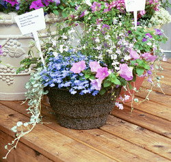 Mixed Spring in 12RD Basket