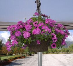 Petunia + Verbena in 12RD Basket