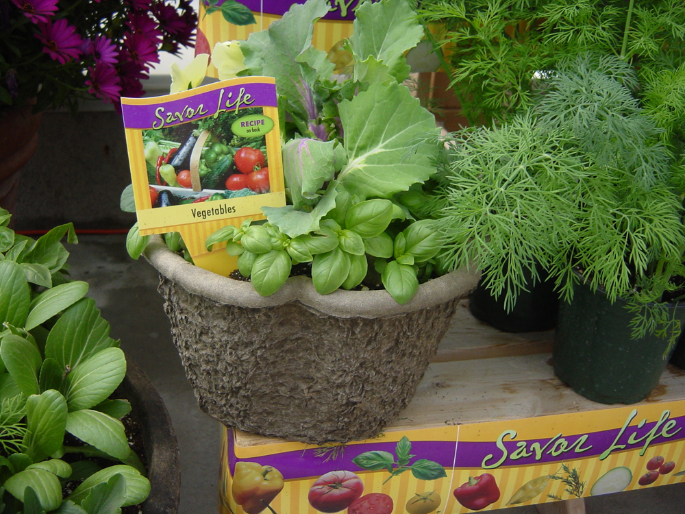 Salad Bowl in 10 Clover