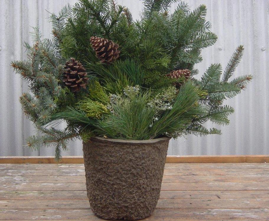 12X11 Christmas Greens