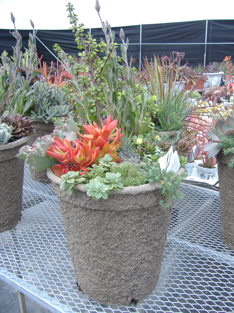 Sedum + Succulents in 15X13
