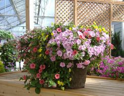 Mixed 12 Traditional Garden Basket