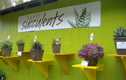 Savvy Succulents