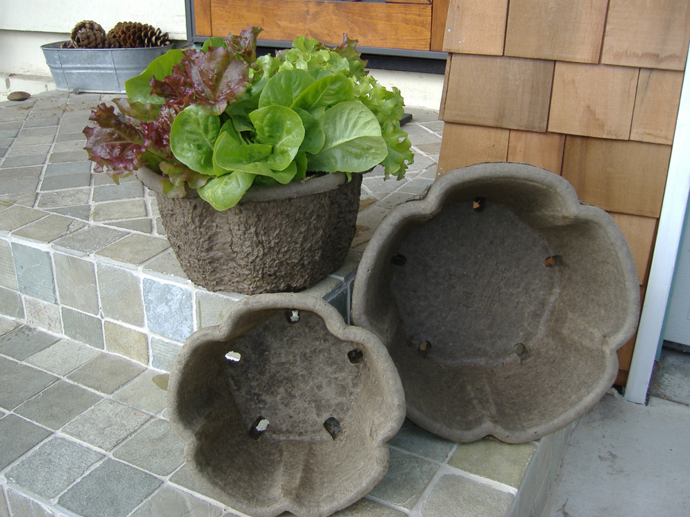 Clover Pots with Lettuce Bowl
