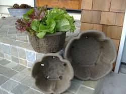 Clover Pots with Lettuce Bowl