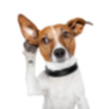 dog listening with big ear in bath
