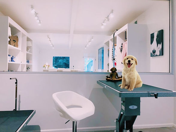 Dog groom happening in West Hollywood