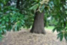 massage ayurvéda abhyanga aromathérapie
