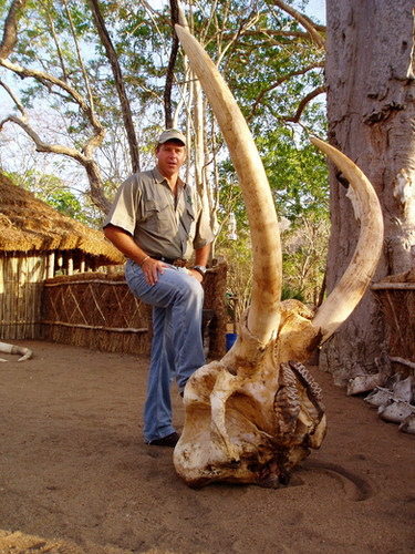 80 Pound Tusks TZ.JPG