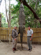 south-africa-crocodile-hunting-safari-nj