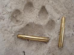 hunting-lions-in-tanzania-safari-njema-9