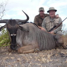 big-5-safari-animals-blue-wildebeest-saf
