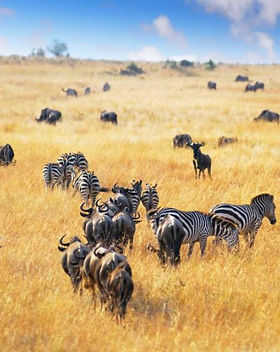 african_landscape._zebras_herd_and_antel