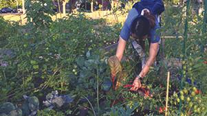 Helping Rochester Grow
