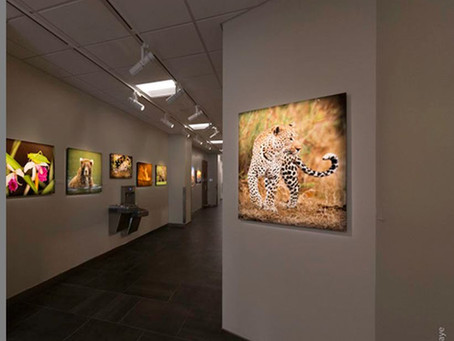 Hallway as Gallery