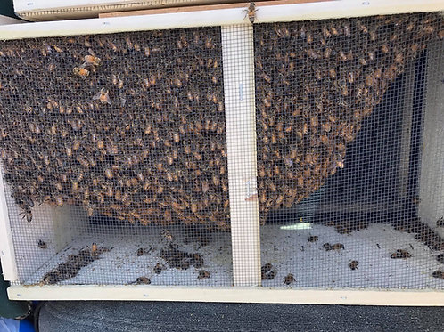 Carniolan Package Bees Early April
