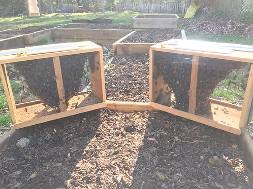 Package Bees 2lbs