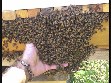 The balancing act of temperament, why I prefer my bees to bee just nice enough.. but not to nice..