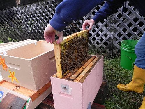 New Beekeeper Eco-Start