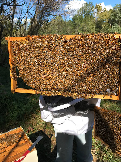 Service Call ~ Bees install