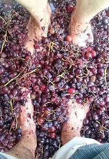 afianes wines greece ikaria wine grape fokiano