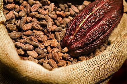 chocolate-seed.jpg
