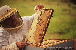 Apiculteur soigner les abeilles
