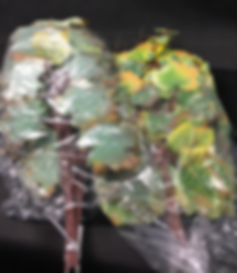 Artificial Leaf