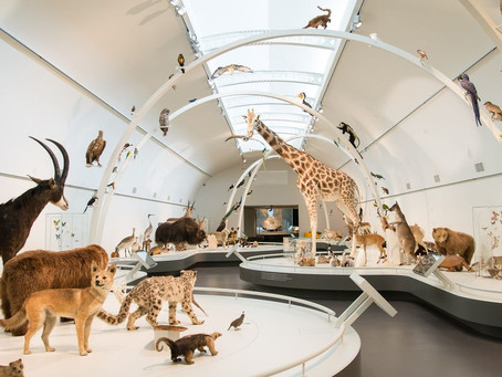 "Opening of the ""Living Planet"" Hall in the Royal Museum of Natural Sciences in Brussels"