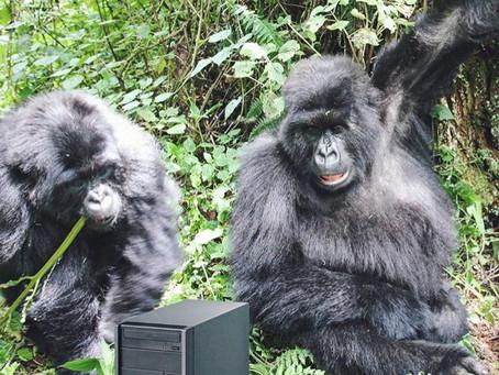 Sum @ Virunga National Park