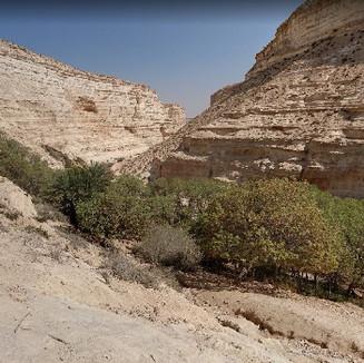 Ein Avdat - Desert Oasis