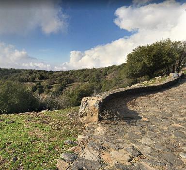 Odem Forest - Golan Heights