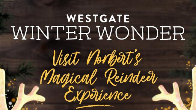 Norbert's Magical Reindeer Experience