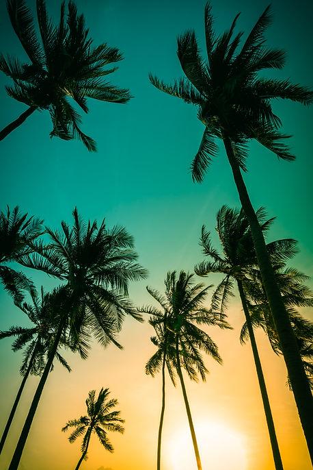 PalmTrees_118987250.jpeg