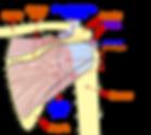 Shoulder joints Ascot Vale