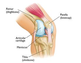 Knee pain Ascot Vale