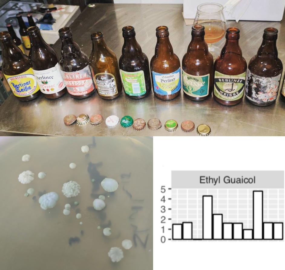 process of brewing beer