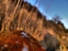 Mousse sur rocher JPEG.jpg