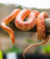 world-snake-day_edited.jpg