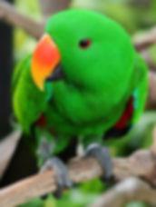 parrots_01-righttop.jpg