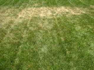 Signs of Summer Lawn Stress